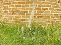 Blumengras Lizenzfreie Stockfotografie