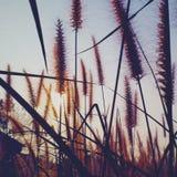 Blumengras Stockfotografie