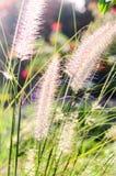 Blumengras Lizenzfreies Stockbild