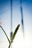 Blumengras auf Morgen stockfotos
