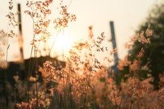 Blumengras mit Morgenlicht Lizenzfreies Stockfoto