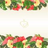 Blumengrenze mit blühendem verschiedenem Hibiscus und tropische Blätter vector Illustrationsblumenhintergrund mit Platz für Ihren Lizenzfreies Stockfoto
