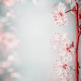 Blumengrenze mit schöner Kirschblüte, Abschluss oben Frühjahrnaturhintergrund, Pastell Stockbilder