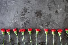 Blumengrenze oder Rahmen mit roten Gartennelken stockfotos