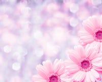 Blumengrenze unscharfer Hintergrund, Blumenkamille stockfoto