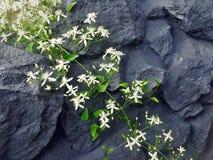 Blumengurt auf Felsen Stockbilder