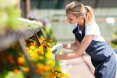 Blumenhändler, der in der Baumschule arbeitet Stockbilder
