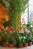 Blumenhändlersystem Lizenzfreies Stockbild
