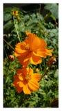 Blumenherbst lizenzfreie stockbilder