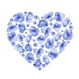 Blumenherzdesign der blauen Aquarellhortensie Stockbild