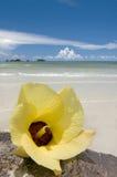 Blumenhibiscus gegen das Meer Lizenzfreie Stockfotografie