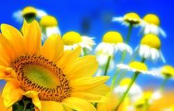 Blumenhintergründe Lizenzfreie Stockfotografie