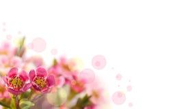 Blumenhintergrund. Lizenzfreies Stockbild