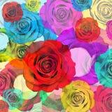 Blumenhintergrund, bunte Rosen Stockfotografie