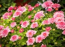 Blumenhintergrund der Blume Garden Stockfoto