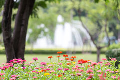 Blumenhintergrund der Blume Garden Lizenzfreies Stockbild