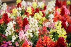 Blumenhintergrund der Blume Garden Lizenzfreies Stockfoto