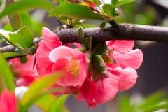Blumenhintergrund der Blume Garden Stockfotos