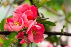 Blumenhintergrund der Blume Garden Lizenzfreie Stockbilder