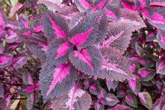 Blumenhintergrund der Blume Garden Stockfotografie