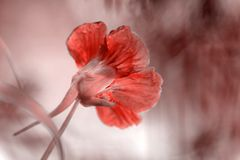 Blumenhintergrund in der Farbe des Jahres 2019 Pantone - Lebenkoralle lizenzfreie stockbilder