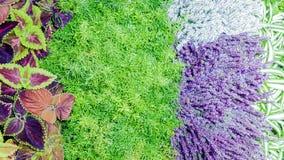 Blumenhintergrund mit Anlagen von verschiedenen Farben Stockfoto