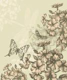 Blumenhintergrund mit blühendem Phlox und fliegendem b Lizenzfreie Stockbilder