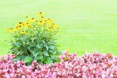 Blumenhintergrund mit den gelben und rosa Blumen Lizenzfreie Stockbilder