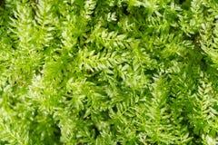 Blumenhintergrund mit exotischem neuem Grün Stockfotos