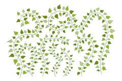 Blumenhintergrund mit grünen kletternden Anlagen Stockfoto