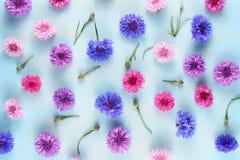 Blumenhintergrund mit Kornblumen Lizenzfreie Stockbilder
