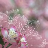 Blumenhintergrund mit Orchideen Lizenzfreie Stockfotografie