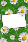 Blumenhintergrund mit Platz für Text Lizenzfreie Stockfotos