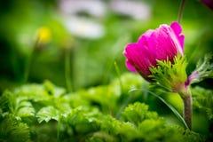 Blumenhintergrund mit Raum für Text Lizenzfreie Stockfotos