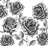 Blumenhintergrund mit Rosen Lizenzfreie Stockfotos