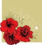 Blumenhintergrund mit rotem Hibiscus Lizenzfreies Stockfoto
