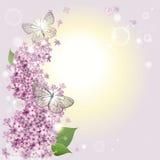 Blumenhintergrund mit Schmetterlingen und einer Flieder Stockfoto