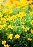 Blumenhintergrund mit Sonnenstrahlen. Stockfotos