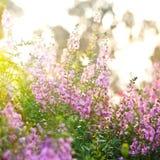 Blumenhintergrund mit Sonnenstrahlen. Stockbild