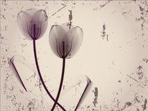 Blumenhintergrund mit Tulpen Stockfotografie