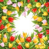 Blumenhintergrund mit Tulpen Lizenzfreies Stockbild