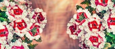 Blumenhintergrund mit Verbeneblumen Stockbilder