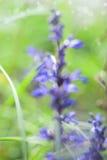 Blumenhintergrund mit wilder blauer Blume unscharf, Textraum Stockfotografie