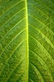 Blumenhintergrund - Oberfläche des Blattes einer Anlage Lizenzfreies Stockfoto