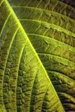Blumenhintergrund - Oberfläche des Blattes einer Anlage Lizenzfreie Stockfotos