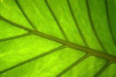 Blumenhintergrund - Oberfläche des Blattes einer Anlage Lizenzfreie Stockfotografie