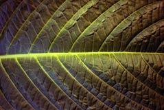 Blumenhintergrund - Oberfläche des Blattes einer Anlage Lizenzfreies Stockbild