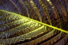 Blumenhintergrund - Oberfläche des Blattes einer Anlage Lizenzfreie Stockbilder