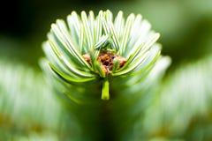 Blumenhintergrund oder Beschaffenheit Lizenzfreies Stockbild