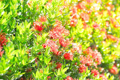 Blumenhintergrund, Sonnenlicht morgens Stockfotos